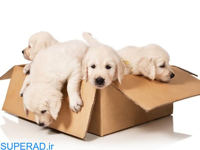 فروش اینترنتی باکس سگ و گربه