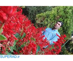 مهندس بهمن میرزاوند - طراح حرفه ای سازه