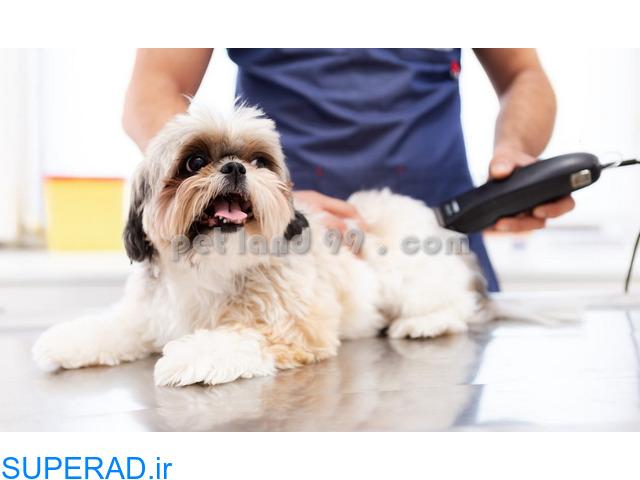 آموزش آرایش گربه و سگ