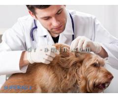 اصلاح مو و آرایش حیوانات