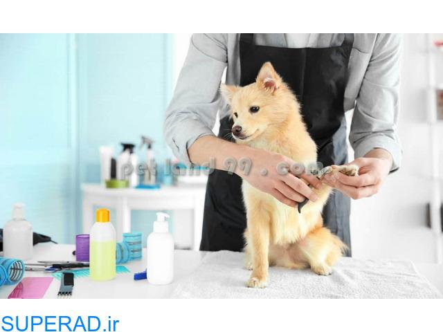 آموزش آرایش حیوانات خانگی