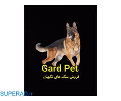 خرید وفروش انواع سگ نگهبان